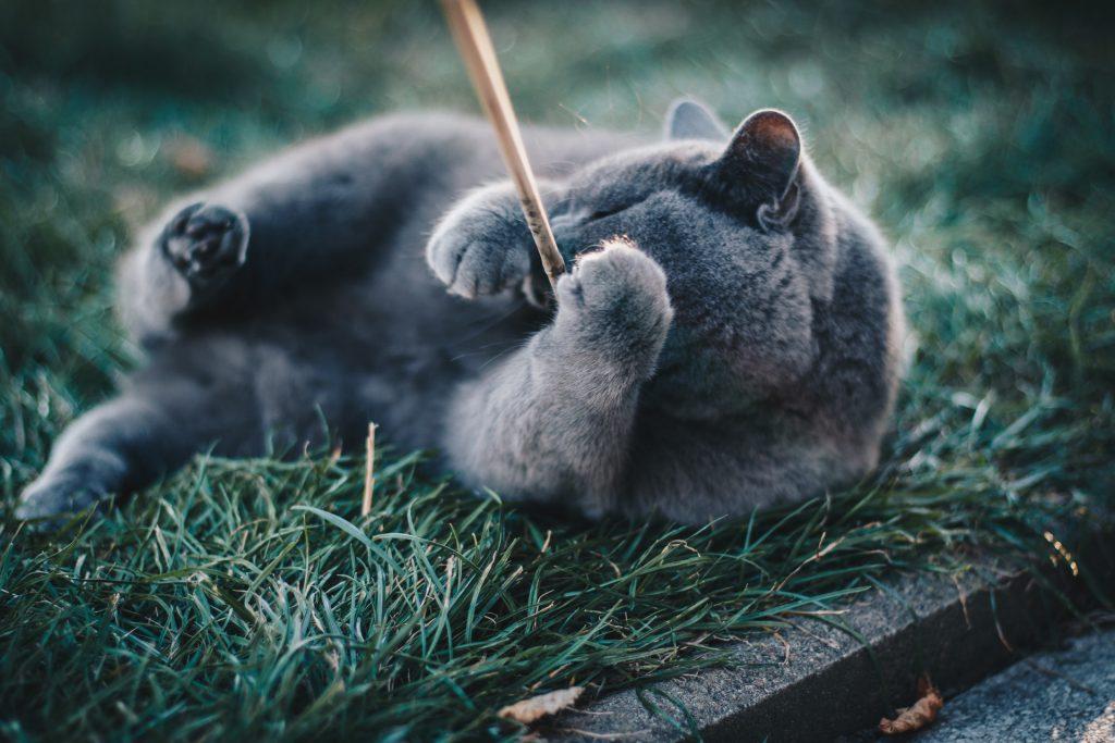 zabawa z kotem - jak zachęcić?