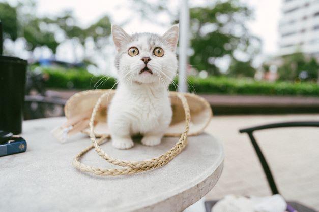 zagrożenia kotów wychodzących